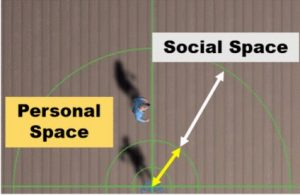 Effect of Vibrotactile Feedback through the Floor on Social Presence in an Immersive Virtual Environment